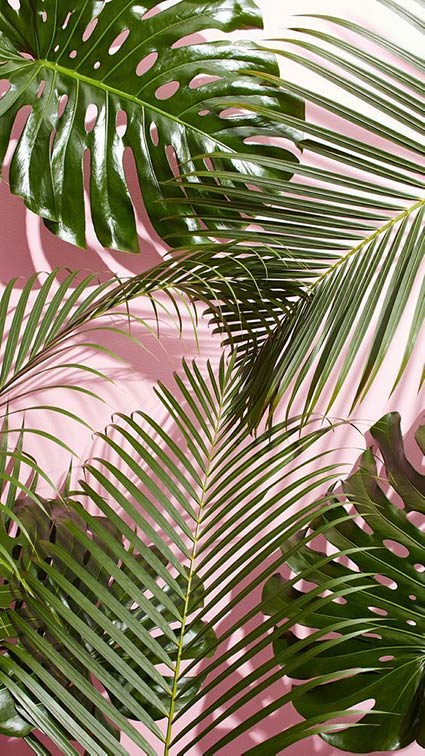 pink and green plants background Kirsty Campbell inspiration